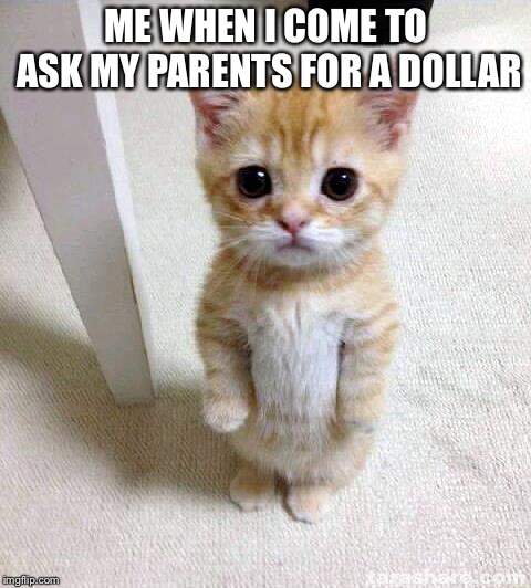 Cute Cat Meme | ME WHEN I COME TO ASK MY PARENTS FOR A DOLLAR | image tagged in memes,cute cat | made w/ Imgflip meme maker