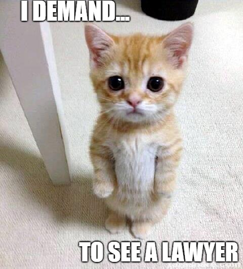 Cute Cat | I DEMAND... TO SEE A LAWYER | image tagged in memes,cute cat | made w/ Imgflip meme maker