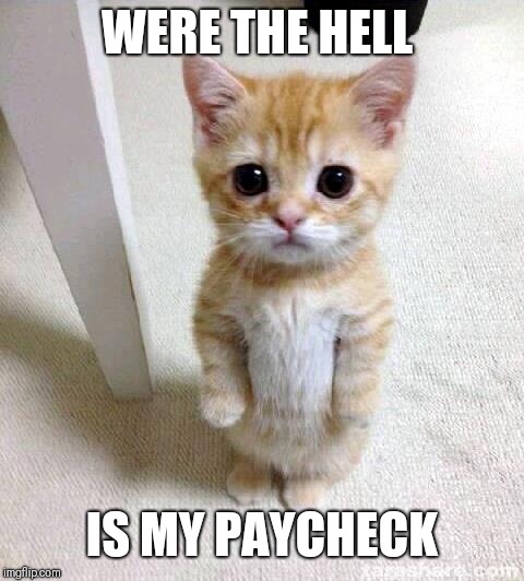 Cute Cat Meme | WERE THE HELL IS MY PAYCHECK | image tagged in memes,cute cat | made w/ Imgflip meme maker