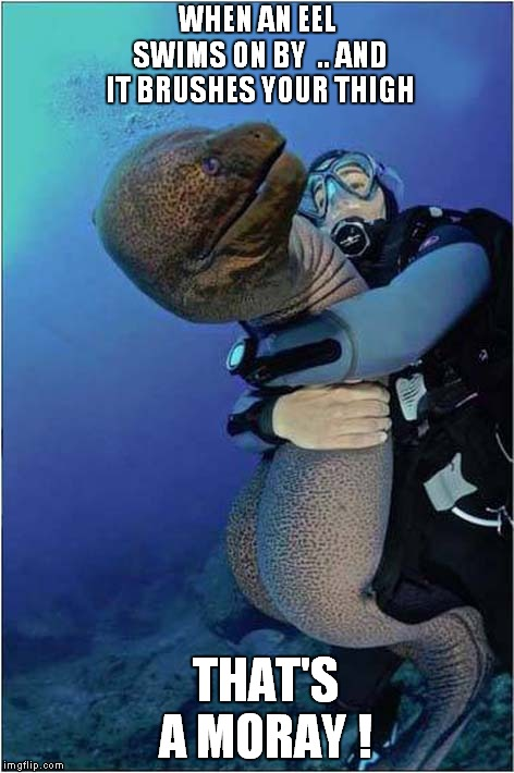 That's a Moray | WHEN AN EEL SWIMS ON BY  .. AND IT BRUSHES YOUR THIGH THAT'S A MORAY ! | image tagged in scuba diving | made w/ Imgflip meme maker