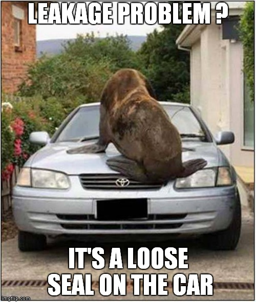 Car Troubles ? | LEAKAGE PROBLEM ? IT'S A LOOSE SEAL ON THE CAR | image tagged in seal | made w/ Imgflip meme maker