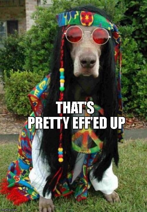 Hippie dog  | THAT'S PRETTY EFF'ED UP | image tagged in hippie dog | made w/ Imgflip meme maker