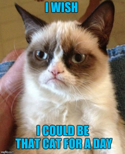 Grumpy Cat Meme | I WISH I COULD BE THAT CAT FOR A DAY | image tagged in memes,grumpy cat | made w/ Imgflip meme maker