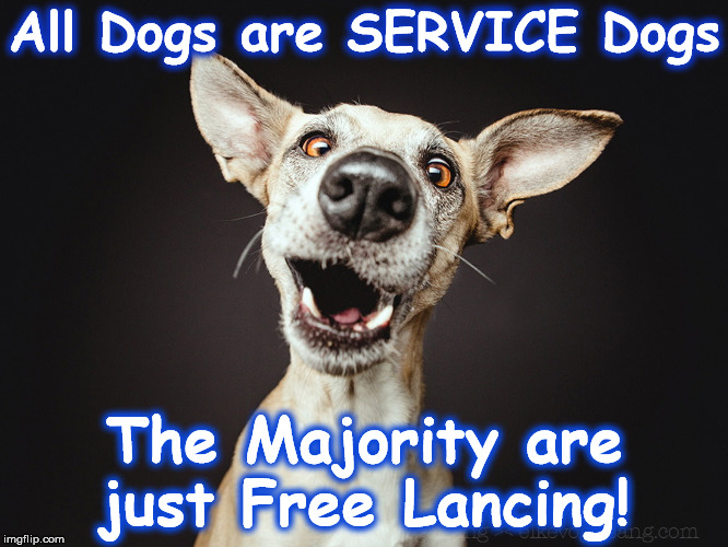 All Dogs are SERVICE Dogs The Majority are just Free Lancing! | image tagged in kk | made w/ Imgflip meme maker