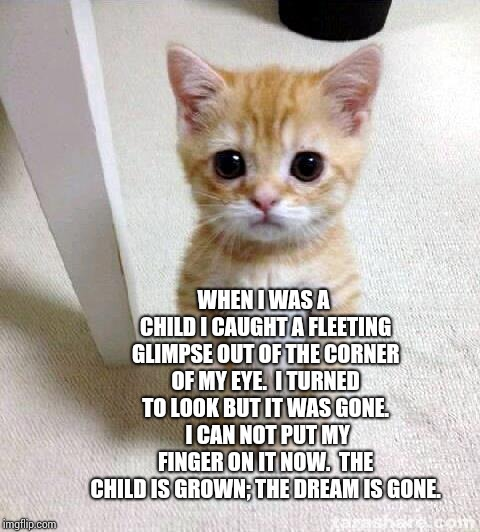 Comfortably Numb | WHEN I WAS A CHILD I CAUGHT A FLEETING GLIMPSE OUT OF THE CORNER OF MY EYE.  I TURNED TO LOOK BUT IT WAS GONE.  I CAN NOT PUT MY FINGER ON I | image tagged in memes,cute cat,numb,comfort,pink floyd,cute kitty | made w/ Imgflip meme maker