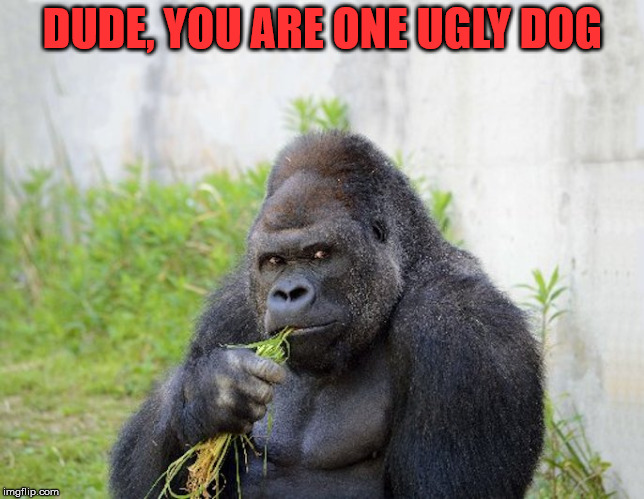 sexy monkey,memes,gorilla | DUDE, YOU ARE ONE UGLY DOG | image tagged in sexy monkey memes gorilla | made w/ Imgflip meme maker