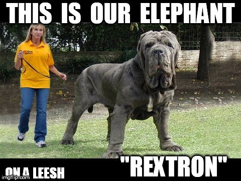"THIS  IS  OUR  ELEPHANT ON A LEESH ""REXTRON"" 