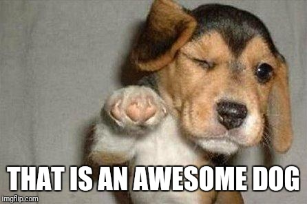 Awesome Dog | THAT IS AN AWESOME DOG | image tagged in awesome dog | made w/ Imgflip meme maker