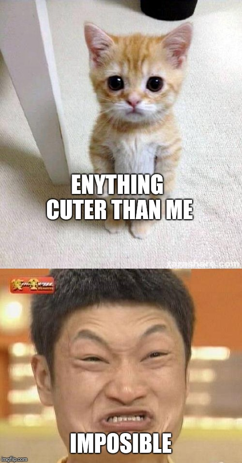 ENYTHING CUTER THAN ME IMPOSIBLE | image tagged in memes,impossibru guy original,cute cat | made w/ Imgflip meme maker
