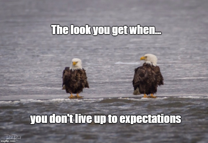 The Look you Get | The look you get when... you don't live up to expectations | image tagged in expectations,bald eagle | made w/ Imgflip meme maker