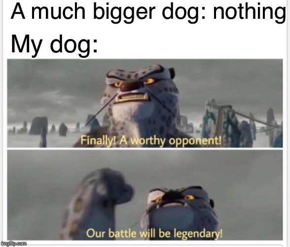 A much bigger dog: nothing My dog: | image tagged in finally a worthy opponent,memes | made w/ Imgflip meme maker