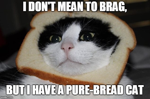 The Pure-Bread Cat | I DON'T MEAN TO BRAG, BUT I HAVE A PURE-BREAD CAT | image tagged in memes,cats | made w/ Imgflip meme maker