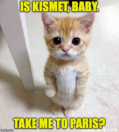 Cute Cat Meme | IS KISMET, BABY. TAKE ME TO PARIS? | image tagged in memes,cute cat | made w/ Imgflip meme maker