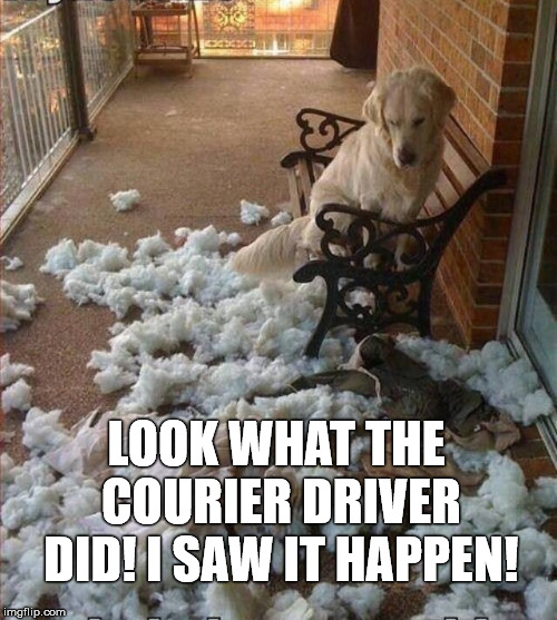 Dog Damage | LOOK WHAT THE COURIER DRIVER DID! I SAW IT HAPPEN! | image tagged in dogs | made w/ Imgflip meme maker