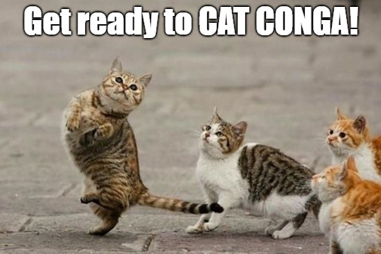 Cat Conga time | Get ready to CAT CONGA! | image tagged in memes,cats,funny cats,dancing cat | made w/ Imgflip meme maker