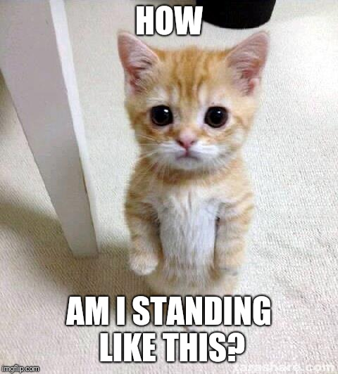 Cute Cat Meme |  HOW; AM I STANDING LIKE THIS? | image tagged in memes,cute cat | made w/ Imgflip meme maker