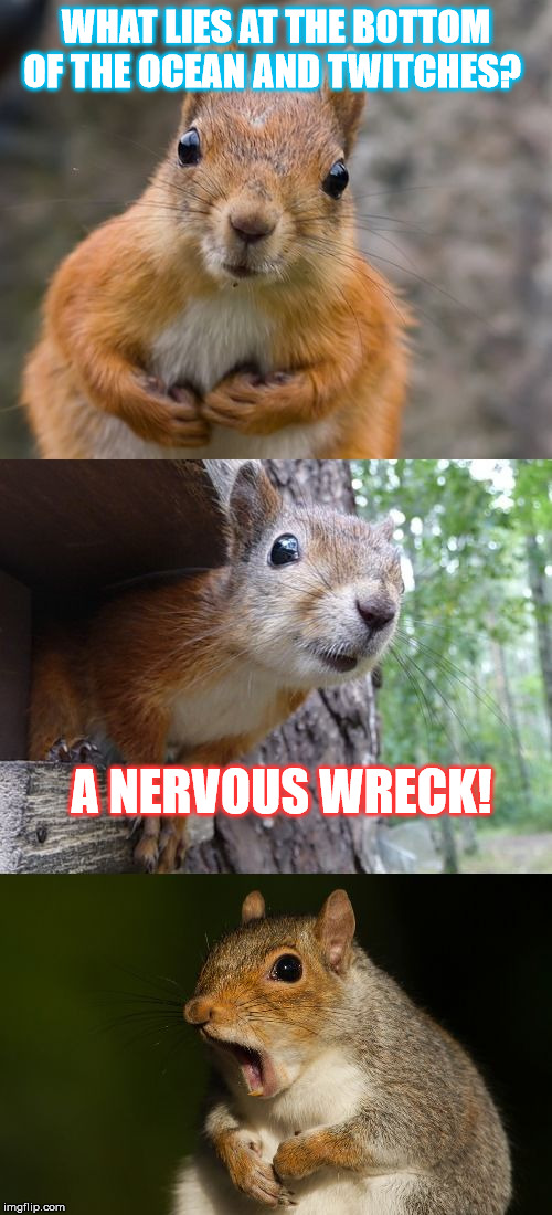 bad pun squirrel | WHAT LIES AT THE BOTTOM OF THE OCEAN AND TWITCHES? A NERVOUS WRECK! | image tagged in bad pun squirrel | made w/ Imgflip meme maker