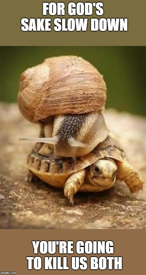 slow down! | FOR GOD'S SAKE SLOW DOWN YOU'RE GOING TO KILL US BOTH | image tagged in snail,turtle | made w/ Imgflip meme maker