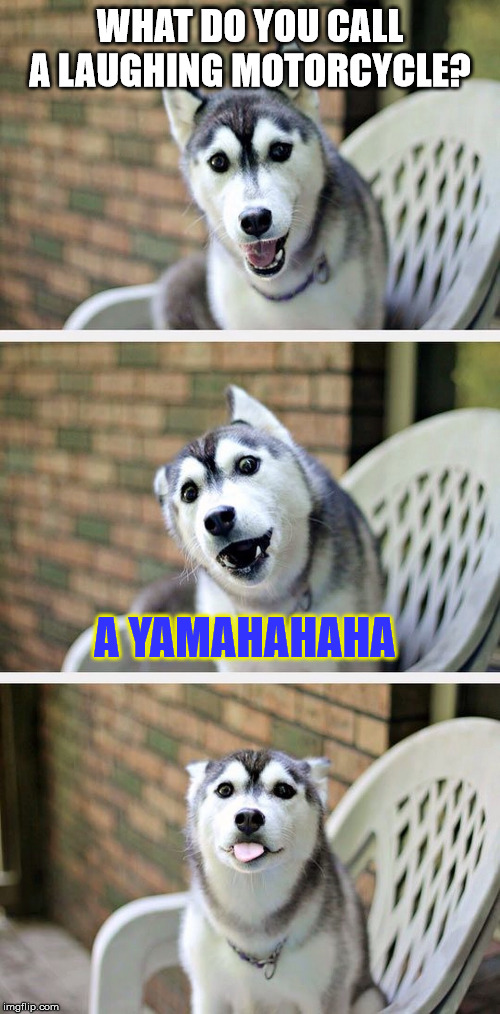 Puns run (on the) wild! | WHAT DO YOU CALL A LAUGHING MOTORCYCLE? A YAMAHAHAHA | image tagged in bad pun dog 2,motorcycle | made w/ Imgflip meme maker
