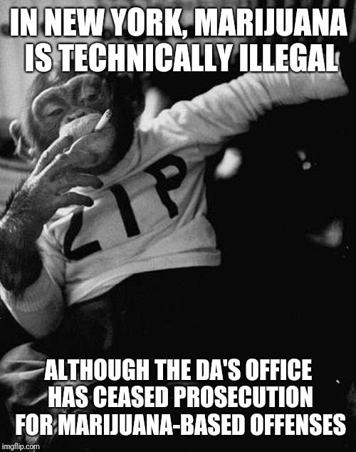 smoking monkey  | IN NEW YORK, MARIJUANA IS TECHNICALLY ILLEGAL ALTHOUGH THE DA'S OFFICE HAS CEASED PROSECUTION FOR MARIJUANA-BASED OFFENSES | image tagged in smoking monkey | made w/ Imgflip meme maker
