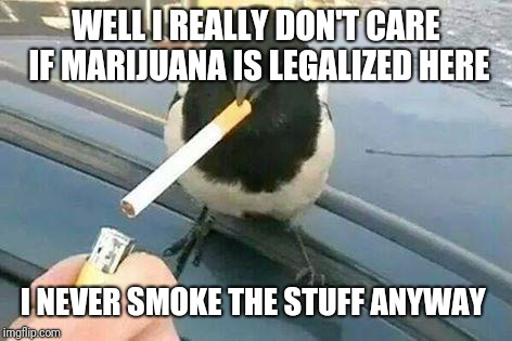 piebald crow smoking a cigarette | WELL I REALLY DON'T CARE IF MARIJUANA IS LEGALIZED HERE I NEVER SMOKE THE STUFF ANYWAY | image tagged in piebald crow smoking a cigarette | made w/ Imgflip meme maker