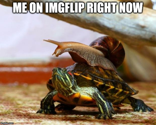 snail on a turtle | ME ON IMGFLIP RIGHT NOW | image tagged in snail on a turtle,memes,buggylememe,imgflip | made w/ Imgflip meme maker
