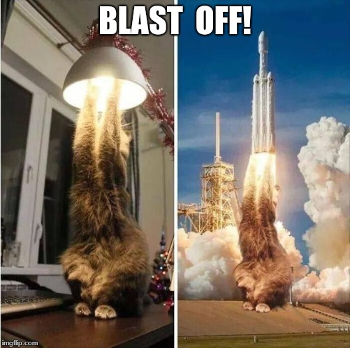 Blast off! | BLAST  OFF! | image tagged in cats,flying,memes,funny | made w/ Imgflip meme maker