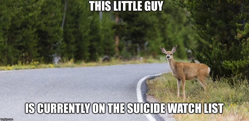 The little quite guy  | THIS LITTLE GUY IS CURRENTLY ON THE SUICIDE WATCH LIST | image tagged in memes,animals,cars,deer,oh no it's retarded,suicide | made w/ Imgflip meme maker