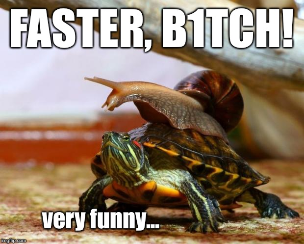 imagine if you will a fantasy world where snails have a mounted division | FASTER, B1TCH! very funny... | image tagged in snail on a turtle,faster | made w/ Imgflip meme maker