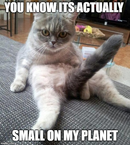 Sexy Cat Meme | YOU KNOW ITS ACTUALLY SMALL ON MY PLANET | image tagged in memes,sexy cat | made w/ Imgflip meme maker