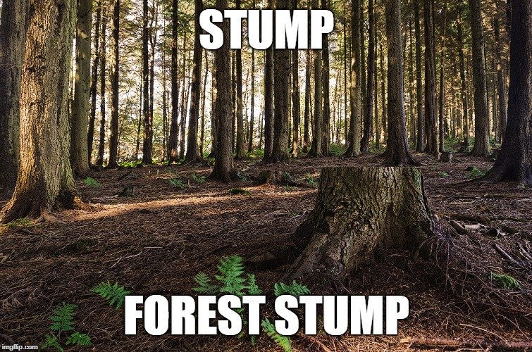 It's Forrest Gump week you say? |  STUMP; FOREST STUMP | image tagged in forrest gump week,forrest gump,forest | made w/ Imgflip meme maker