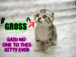 Sad Cat | GROSS SAID NO ONE TO THIS KITTY EVER | image tagged in memes,sad cat | made w/ Imgflip meme maker