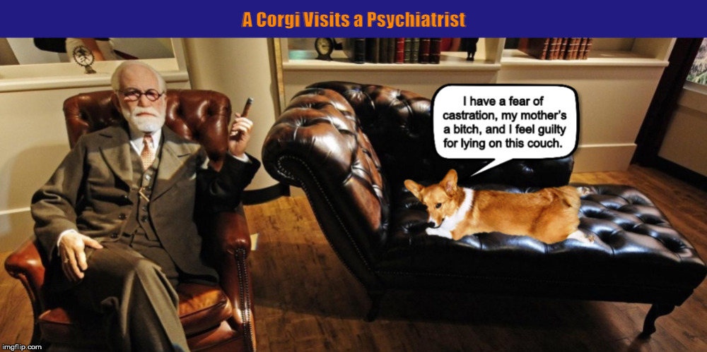 A Corgi Visits a Psychiatrist | image tagged in corgi,dog,psychiatrist,funny,memes,dogs | made w/ Imgflip meme maker