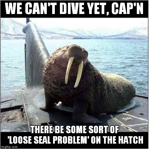 Loose Seal ( I know it's a Walrus!) | WE CAN'T DIVE YET, CAP'N THERE BE SOME SORT OF 'LOOSE SEAL PROBLEM' ON THE HATCH | image tagged in fun,happy seal | made w/ Imgflip meme maker