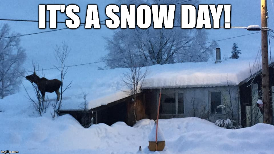 Snow Day  | IT'S A SNOW DAY! | image tagged in snow day,moose,winter,ontario,canada | made w/ Imgflip meme maker