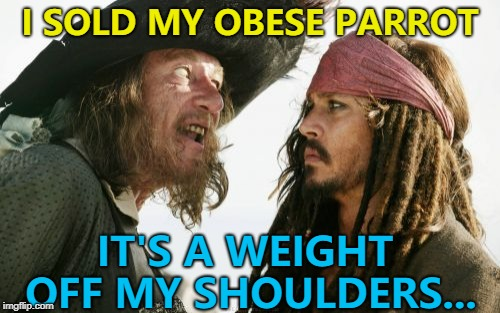 It must've been all those crackers... :) | I SOLD MY OBESE PARROT IT'S A WEIGHT OFF MY SHOULDERS... | image tagged in memes,barbosa and sparrow,parrots | made w/ Imgflip meme maker