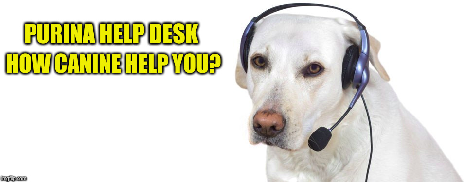 When outsourcing to Asia or Africa no longer pays off... |  PURINA HELP DESK; HOW CANINE HELP YOU? | image tagged in memes,dog,headphones,purina,call center rep | made w/ Imgflip meme maker