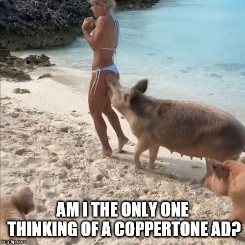 Meh, probably not..... | AM I THE ONLY ONE THINKING OF A COPPERTONE AD? | image tagged in advertising,beach | made w/ Imgflip meme maker