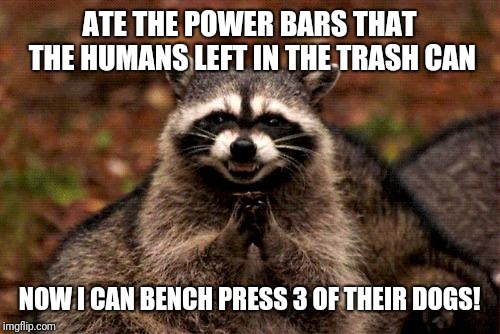 Power bars plan | ATE THE POWER BARS THAT THE HUMANS LEFT IN THE TRASH CAN NOW I CAN BENCH PRESS 3 OF THEIR DOGS! | image tagged in memes,evil plotting raccoon,power bars,funny,bench pressing | made w/ Imgflip meme maker