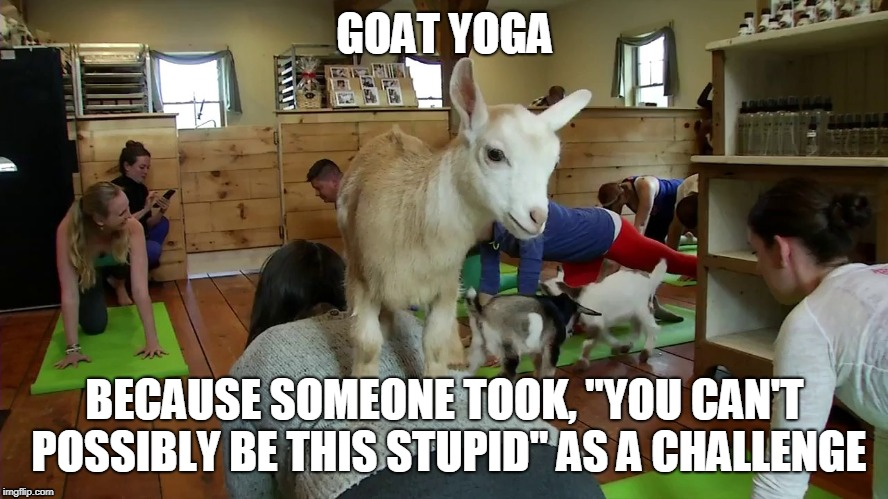 "There is no limit to human stupidity. --Einstein | GOAT YOGA BECAUSE SOMEONE TOOK, ""YOU CAN'T POSSIBLY BE THIS STUPID"" AS A CHALLENGE 