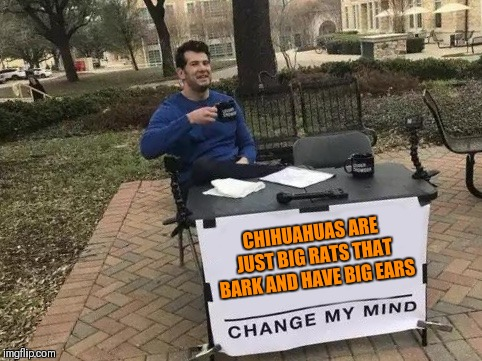 Chihuahuas are my favorite breed of dog! |  CHIHUAHUAS ARE JUST BIG RATS THAT BARK AND HAVE BIG EARS | image tagged in change my mind,memes,funny,chihuahua,dogs,pets | made w/ Imgflip meme maker