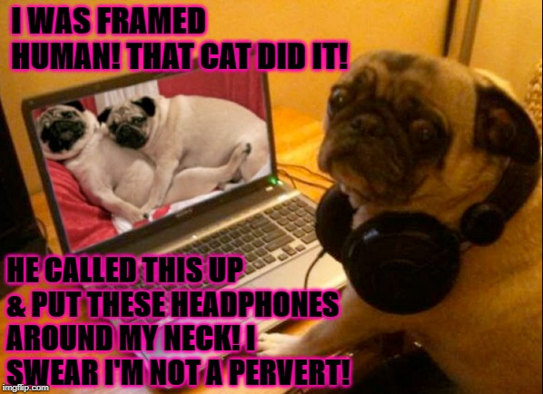 I WAS FRAMED HUMAN! THAT CAT DID IT! HE CALLED THIS UP & PUT THESE HEADPHONES AROUND MY NECK! I SWEAR I'M NOT A PERVERT! | image tagged in i'm not guilty | made w/ Imgflip meme maker
