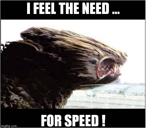 I feel the need for speed ! | I FEEL THE NEED ... FOR SPEED ! | image tagged in fun,hot dogs | made w/ Imgflip meme maker