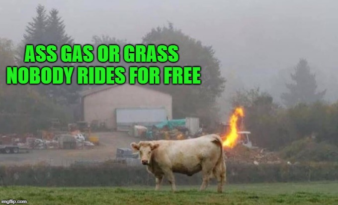 beefed up ride | ASS GAS OR GRASS NOBODY RIDES FOR FREE | image tagged in cow,gas | made w/ Imgflip meme maker