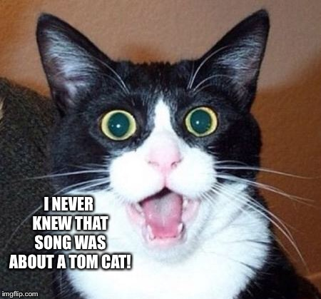 Surprised cat lol | I NEVER KNEW THAT SONG WAS ABOUT A TOM CAT! | image tagged in surprised cat lol | made w/ Imgflip meme maker