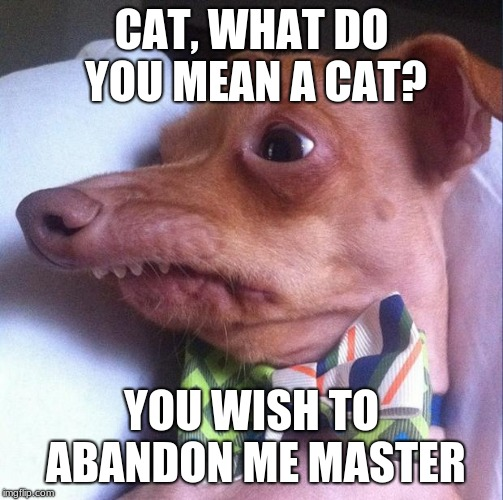 Tuna the dog (Phteven) | CAT, WHAT DO YOU MEAN A CAT? YOU WISH TO ABANDON ME MASTER | image tagged in tuna the dog phteven | made w/ Imgflip meme maker