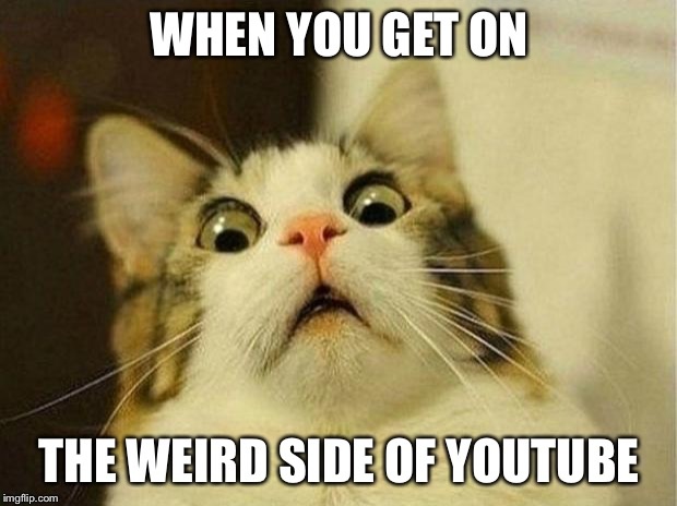 Scared Cat | WHEN YOU GET ON THE WEIRD SIDE OF YOUTUBE | image tagged in memes,scared cat | made w/ Imgflip meme maker