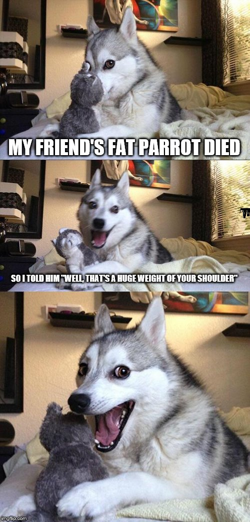 "Bad Pun Dog Meme | MY FRIEND'S FAT PARROT DIED SO I TOLD HIM ""WELL, THAT'S A HUGE WEIGHT OF YOUR SHOULDER"" 