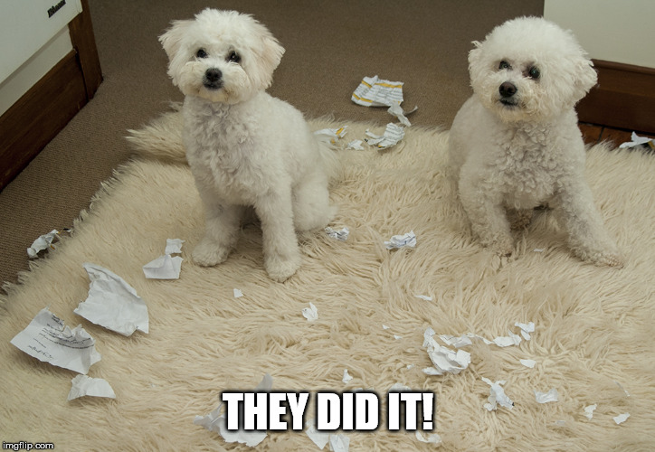 Dog Ate Homework | THEY DID IT! | image tagged in dog ate homework | made w/ Imgflip meme maker