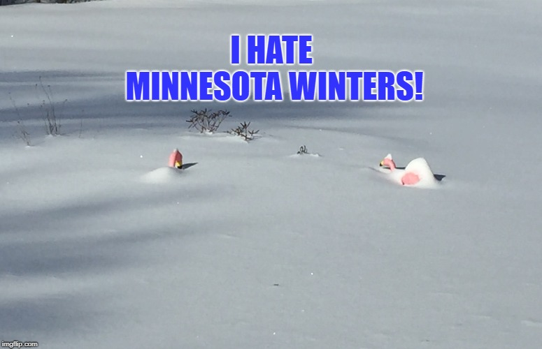 Flamingos Hate Minnesota Winters! | I HATE MINNESOTA WINTERS! | image tagged in funny memes,winter,minnesota,flamingos,snow,cold weather | made w/ Imgflip meme maker